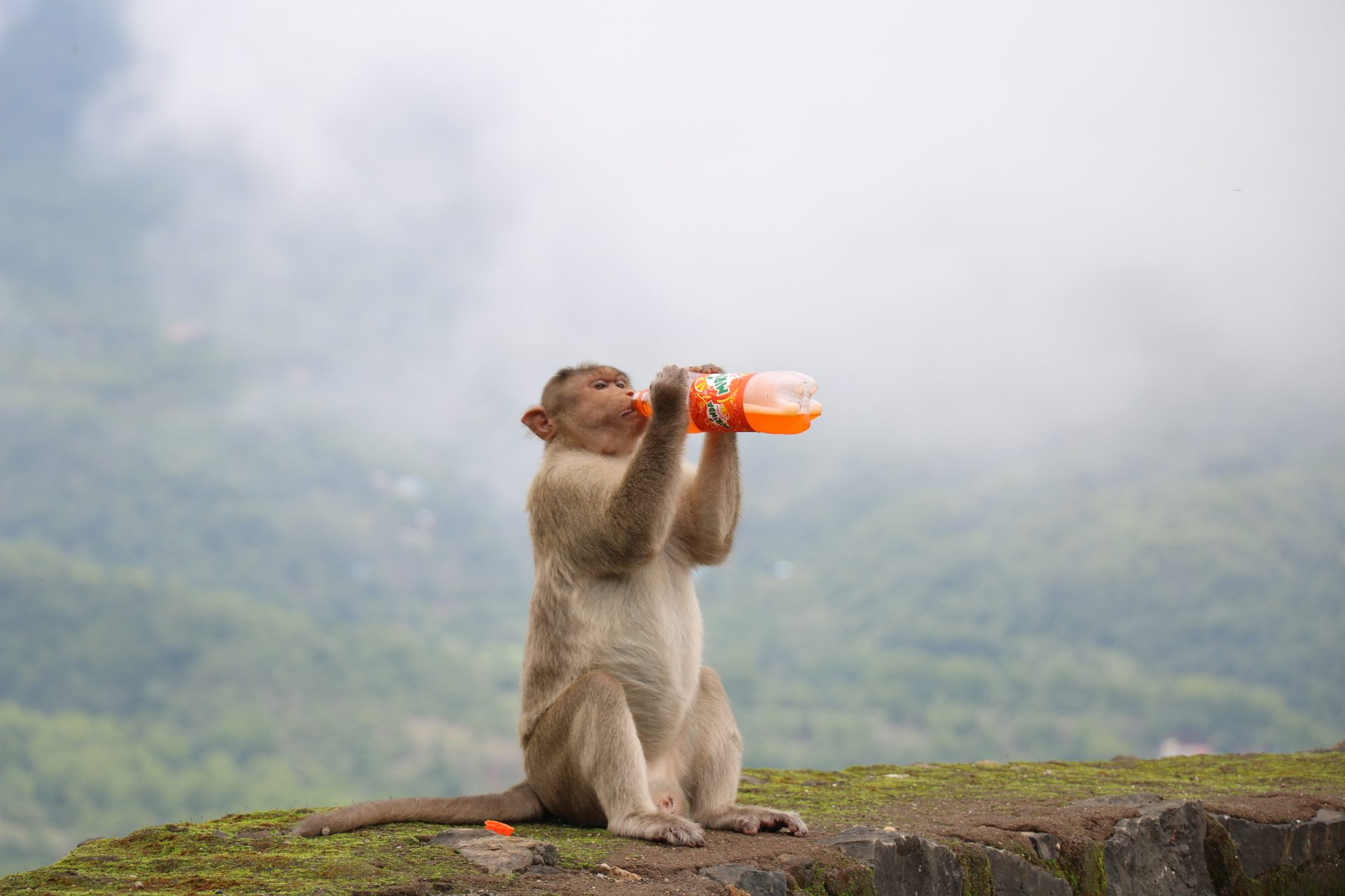 Have monkeys been in the stone age all this time?