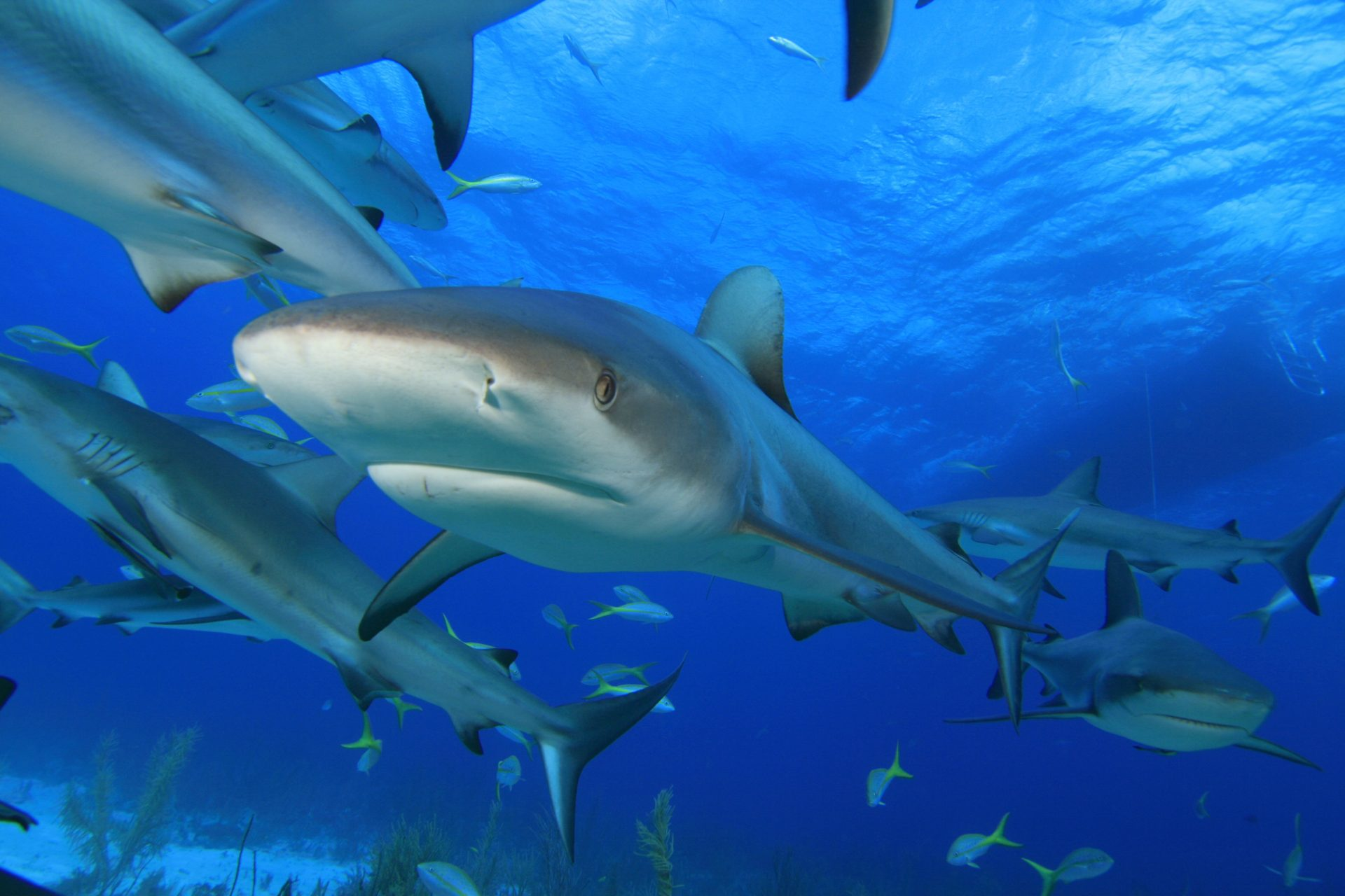 The importance of sharks: the truth behind the ocean's 'monstrous villains'