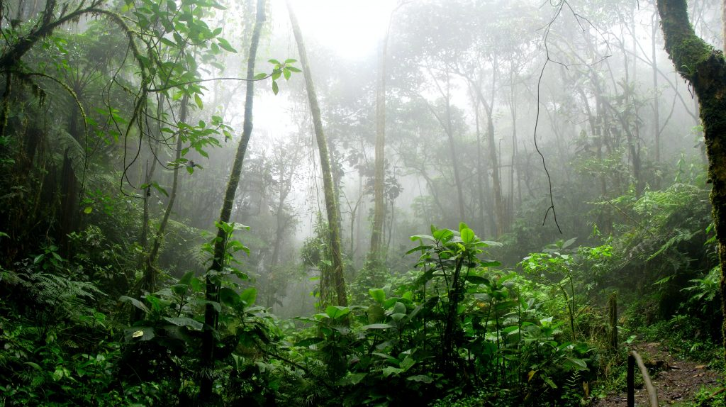 rainforest during foggy day 975771 | 09/07/2020
