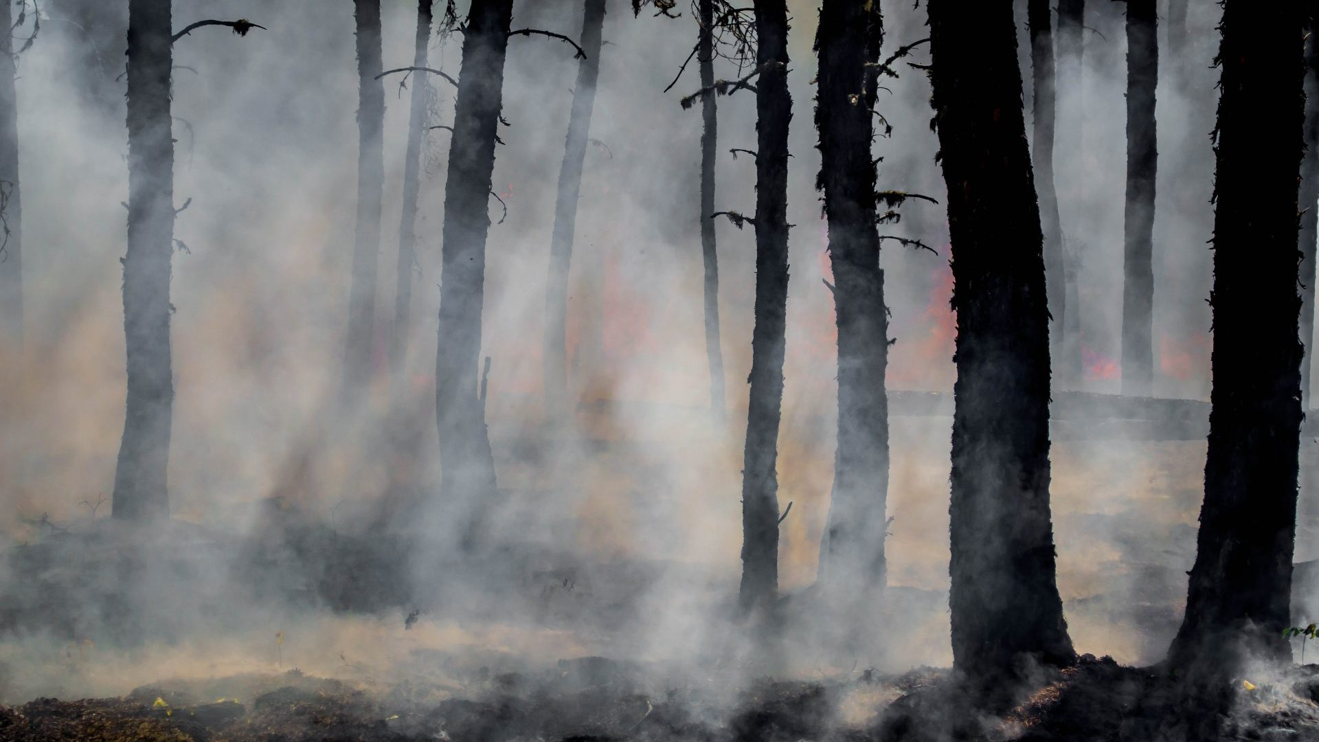 Californian forest fires linked to climate change
