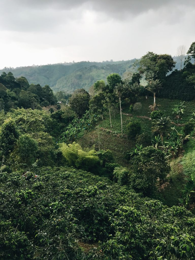 Colombia, crops in hills