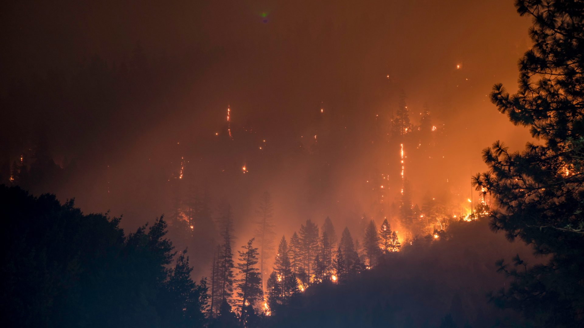 Aggressive Californian Forest Fires Continue
