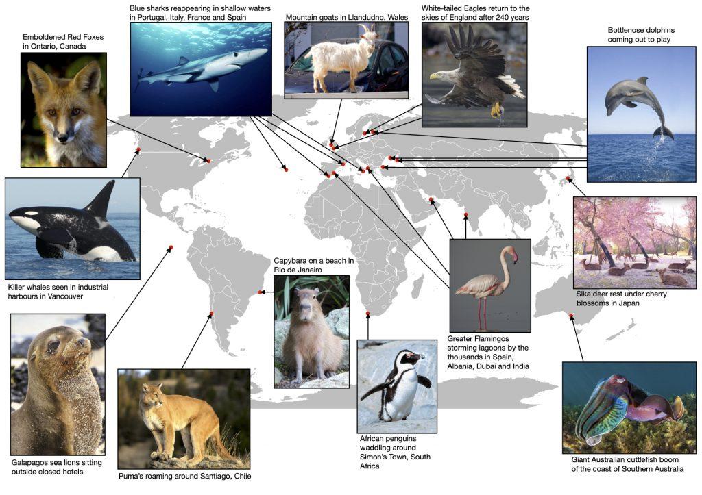 Impacts on nature around the world.