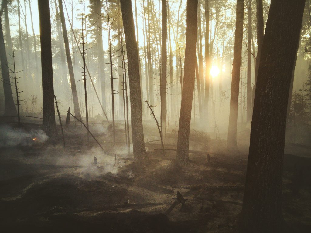 What is Global Warming and how will it affect forests?