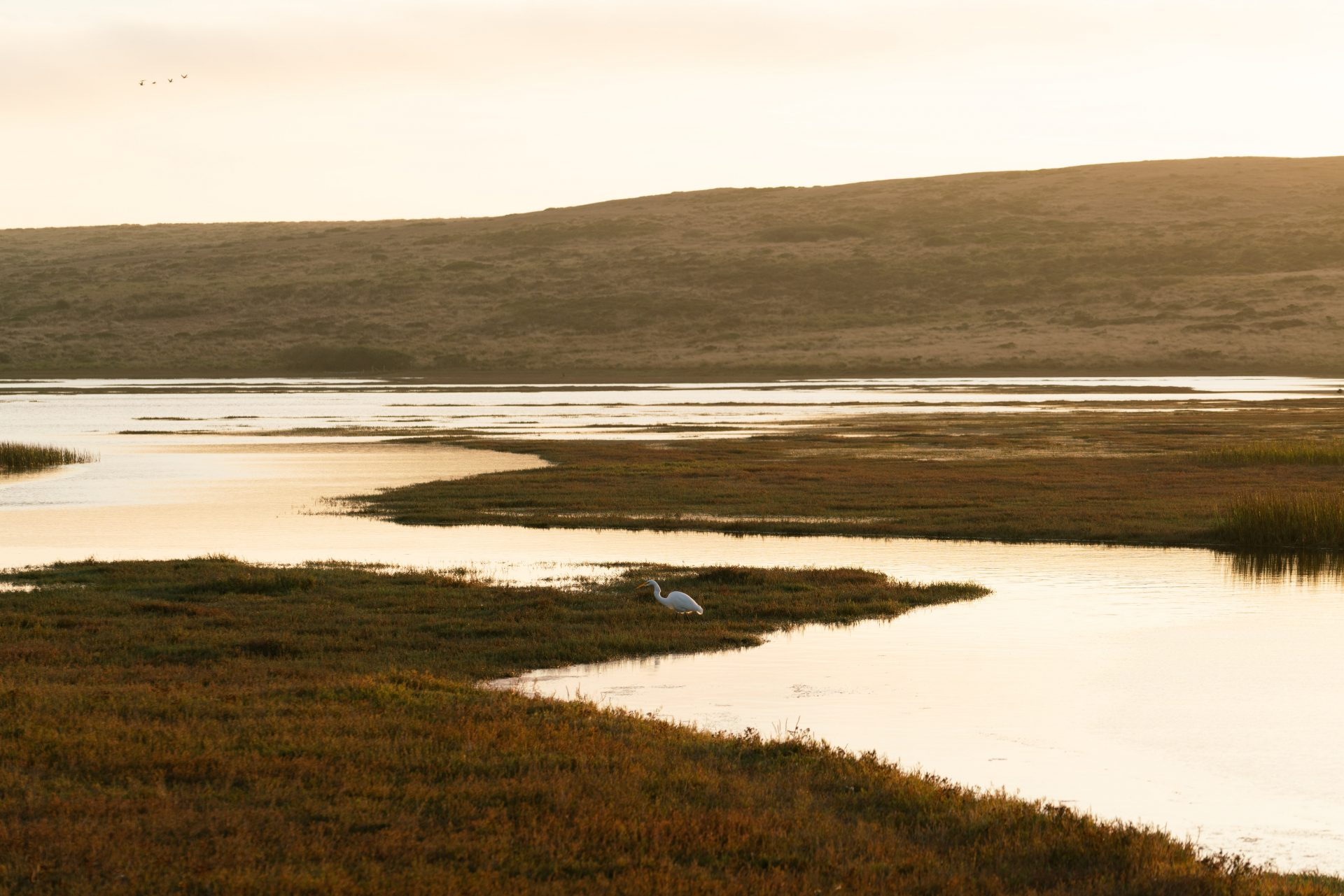 US Wetlands recovery could solve water pollution crisis