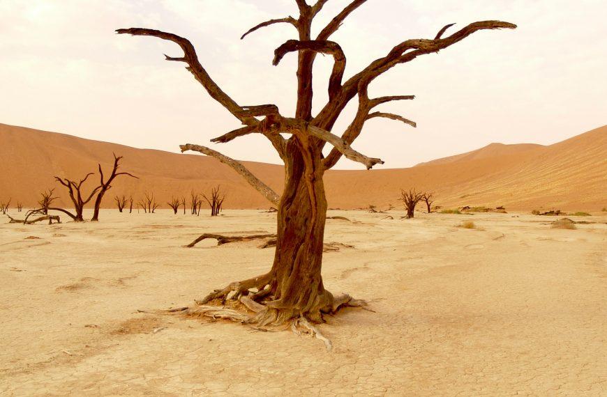 IPCC Report 2021: Reaction, Headlines and Implications